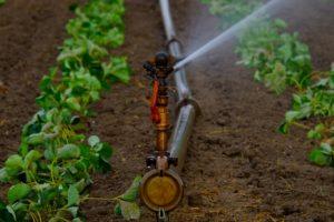 water sprinklers 880970 1920 300x200 - water-sprinklers-880970_1920