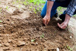 soil 2561136 1920 300x200 - soil-2561136_1920