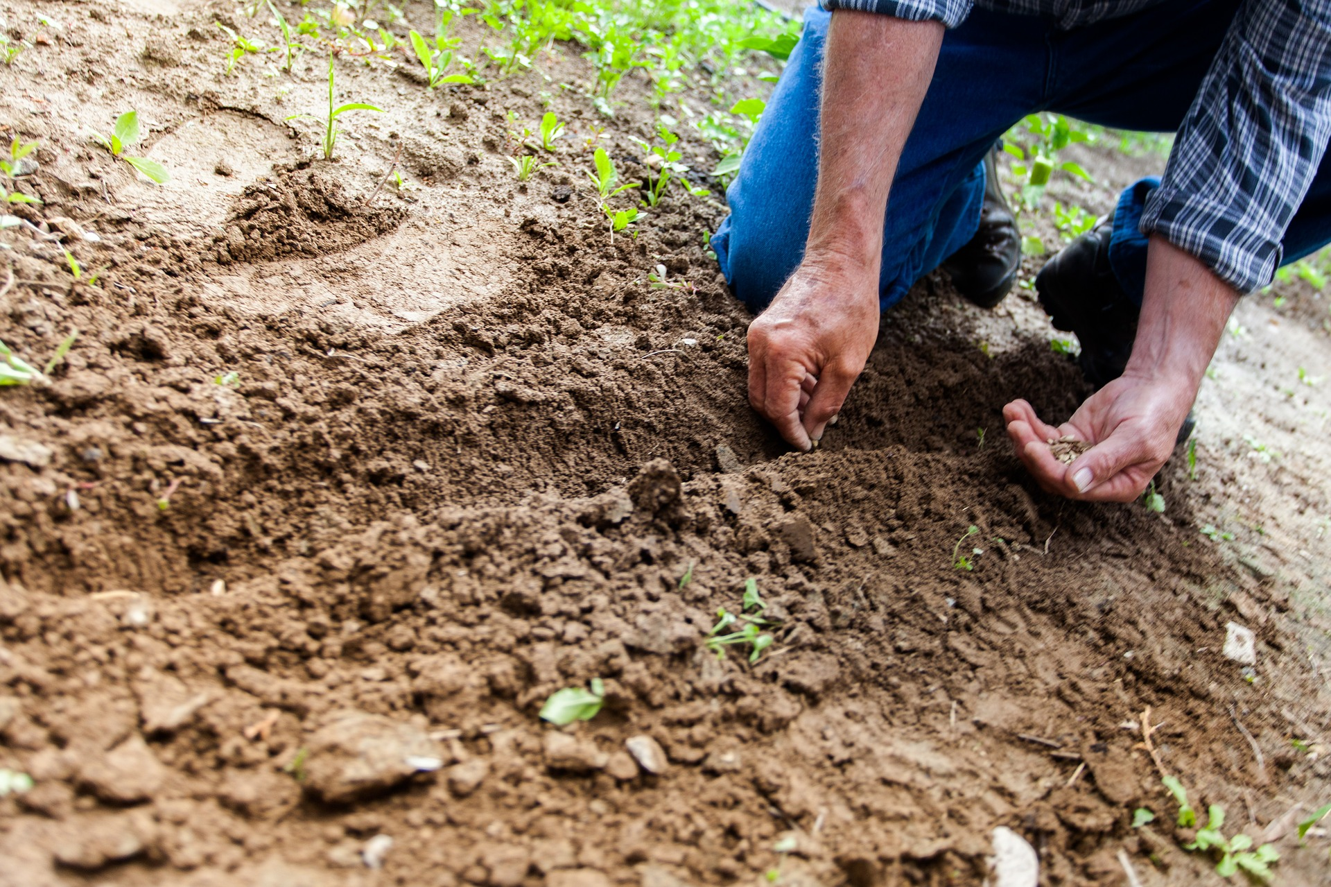 soil 2561136 1920 - Η σημασία της Εδαφολογικής Ανάλυσης