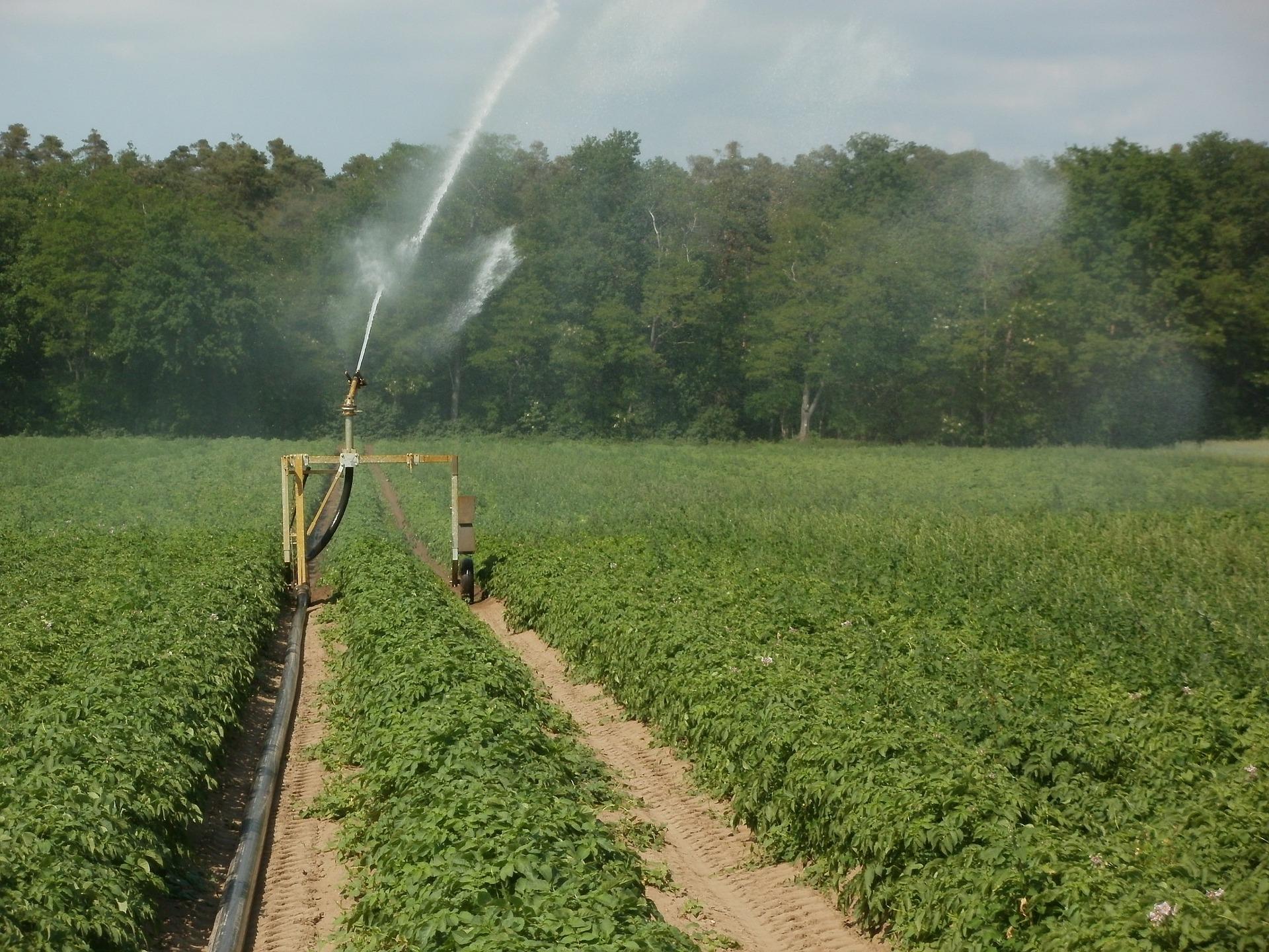 potato 839469 1920 - Άρδευση και ποιότητα καλλιέργειας