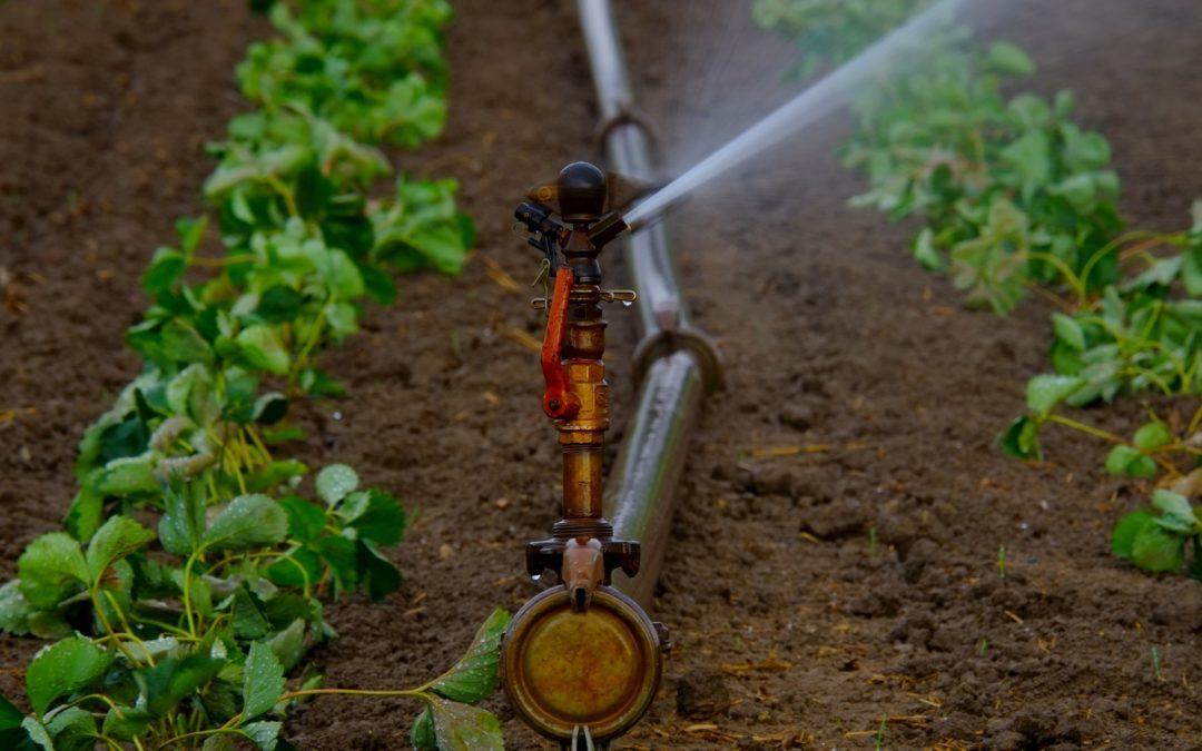 Άρδευση και ποιότητα καλλιέργειας