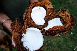 coconut 300x200 - καρύδα