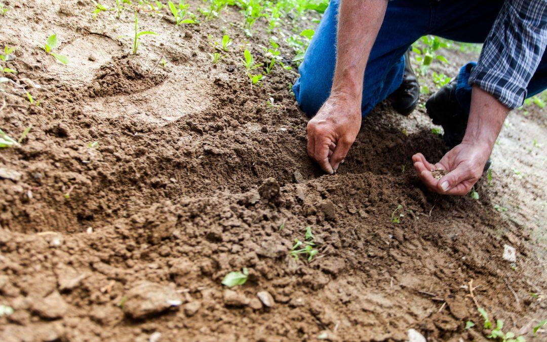 soil analysis 1080x675 - ΑΡΧΙΚΗ